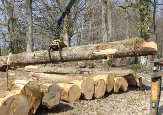 """Travail à la """"chêne"""""""